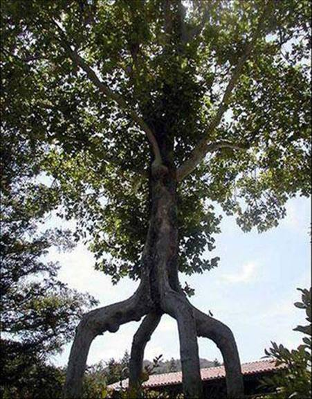 ���� ���� ����� �����㿿 arbre1.jpg