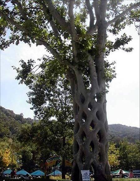 ���� ���� ����� �����㿿 arbre2.jpg