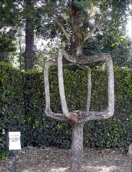 ���� ���� ����� �����㿿 arbre3.jpg